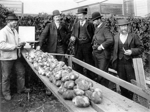 Patates Lobisi